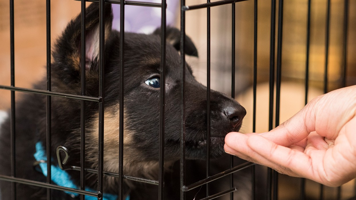 Crate training 101 | The Humane Society of the United States